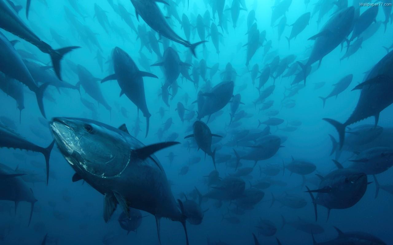 industria atunera ecuatoriana