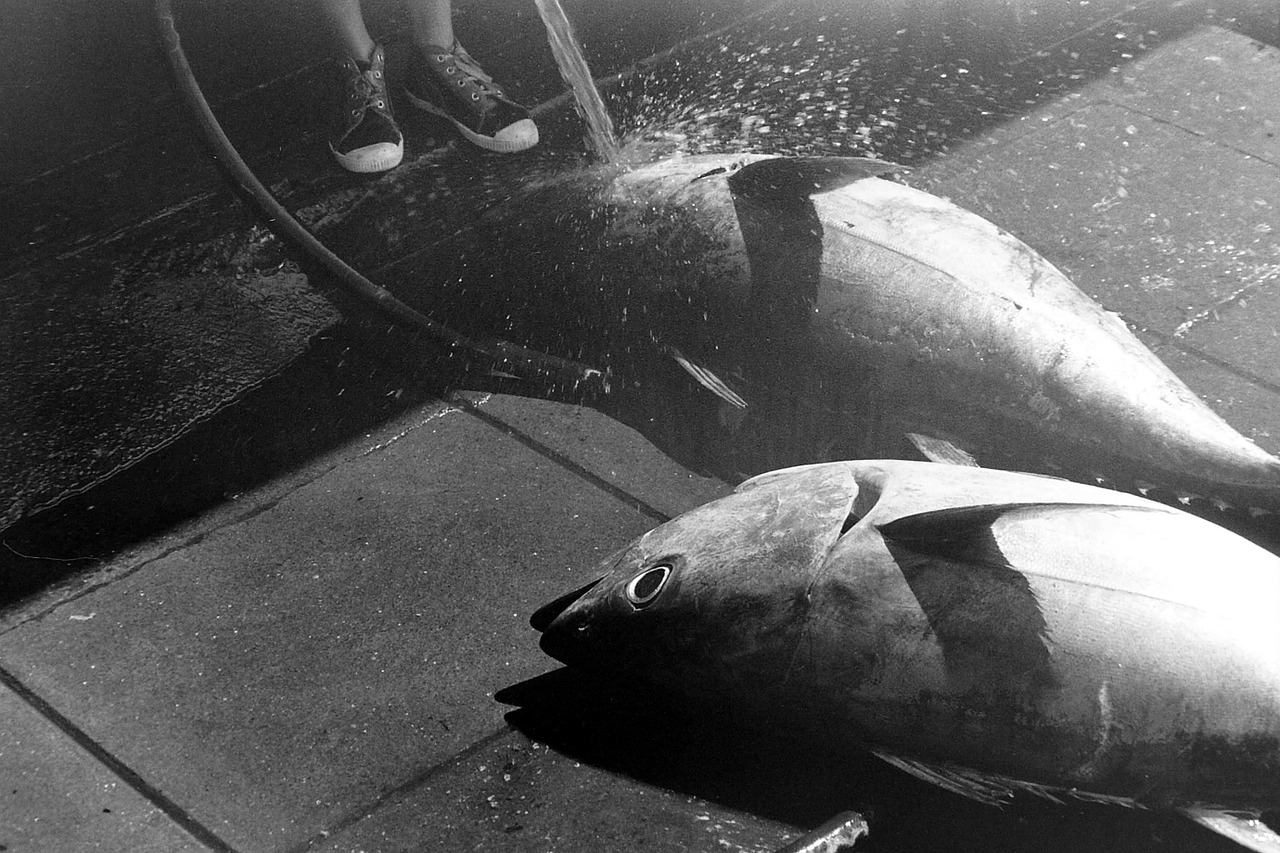 sobrepesca