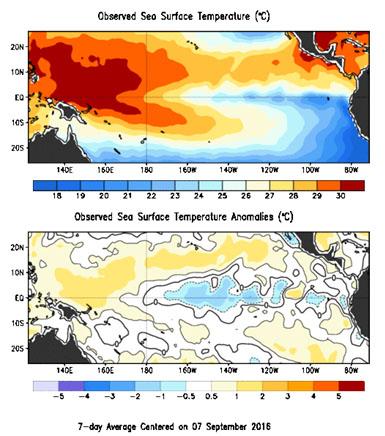 Fig. 1. Distribución de temperatura superficial y su anomalía en el Oceano Pacifico, al 7 de septiembre 2016