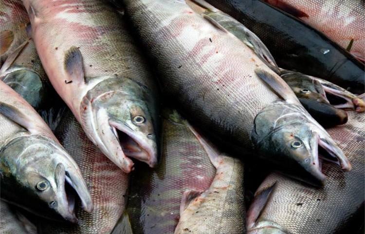 subsidios pesca