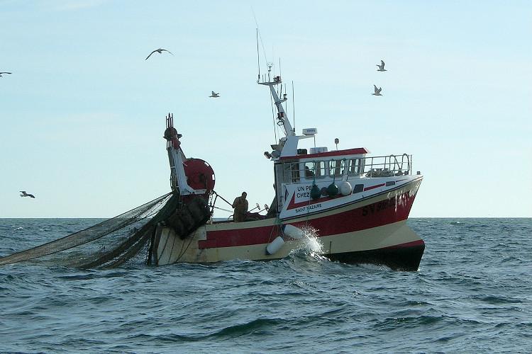 Cierran provisionalmente pesquería de atún blanco
