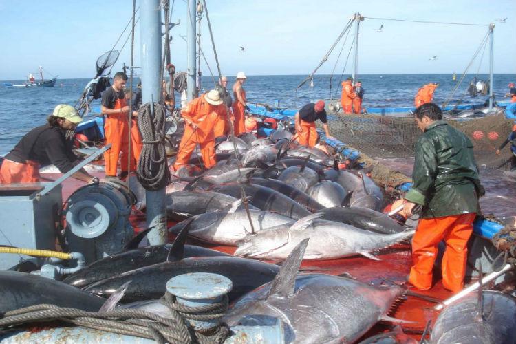 Cataluña pide cuota suplementaria para la captura artesanal de atún
