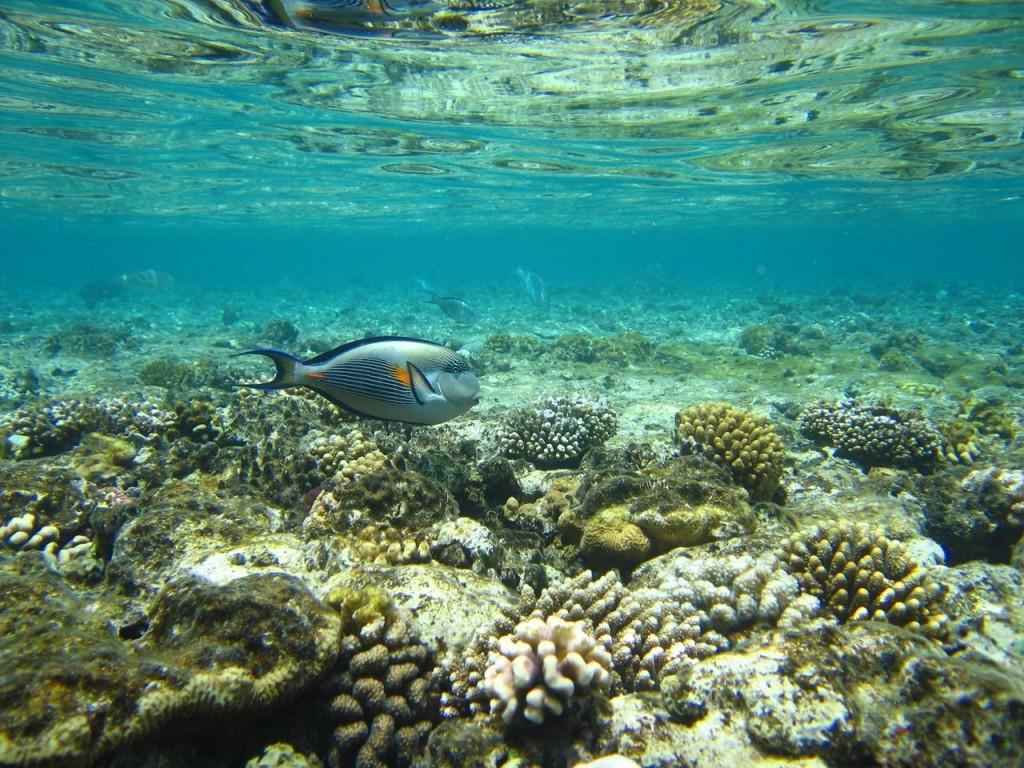 fish-coral-1372233-1280x960-C