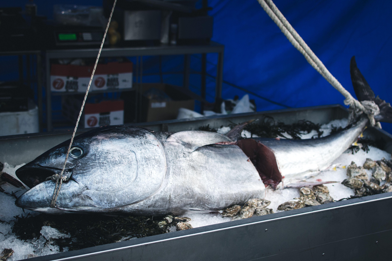 La veda de especies y el caso del atún en Ecuador