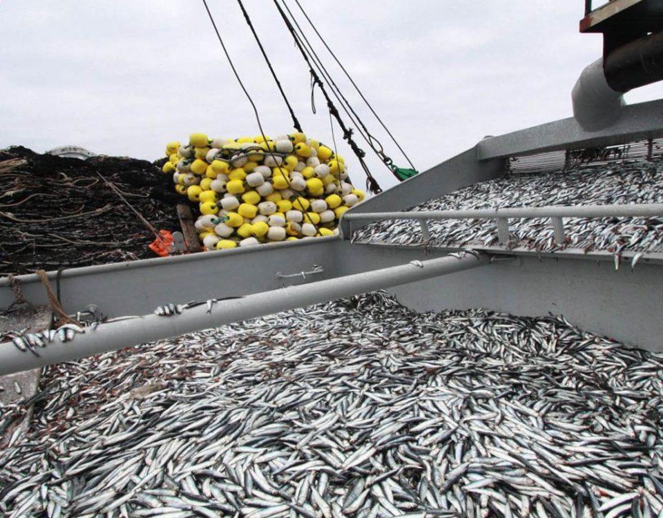 exportaciones pesqueras a diciembre 2016