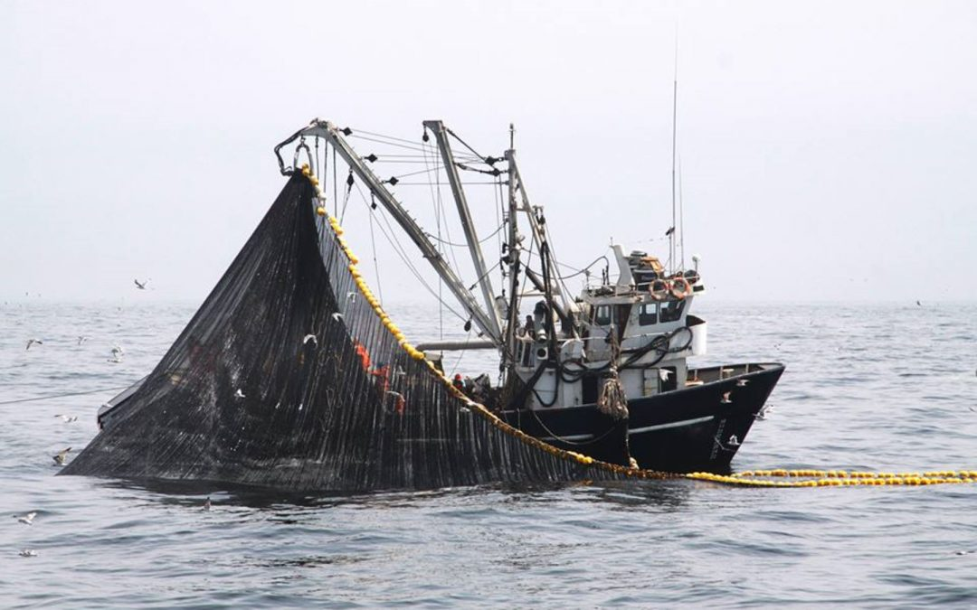 Industria peruana retoma la pesca de anchoveta en zona norte – centro del país