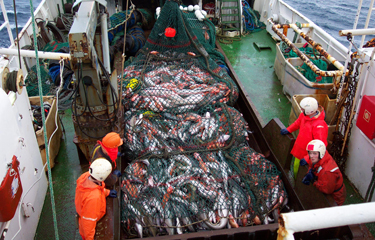 Producción pesquera al máximo, según FAO