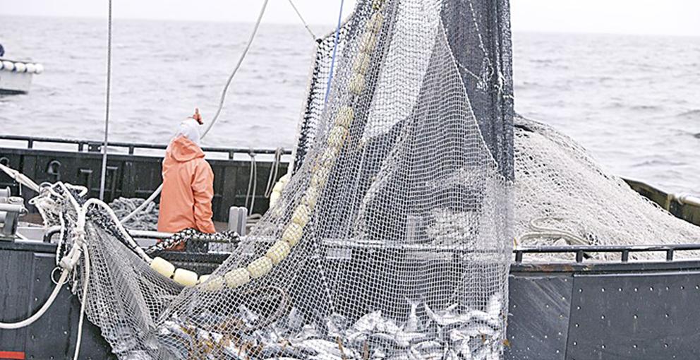 Pesca peruana logra mayor tasa de expansión de últimos 6 años