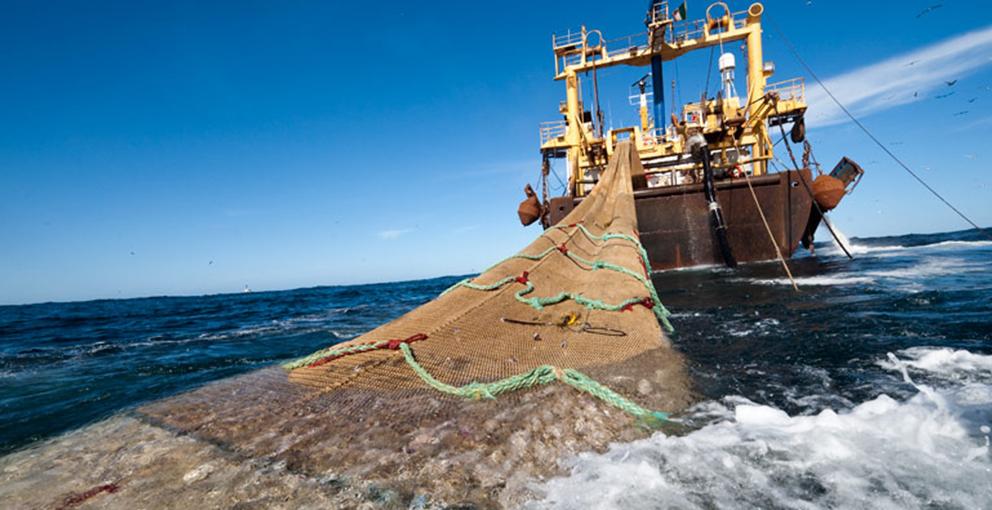 Una investigación de la Universidad de Washington rebaja la huella ambiental de la pesca del 55% al 4%