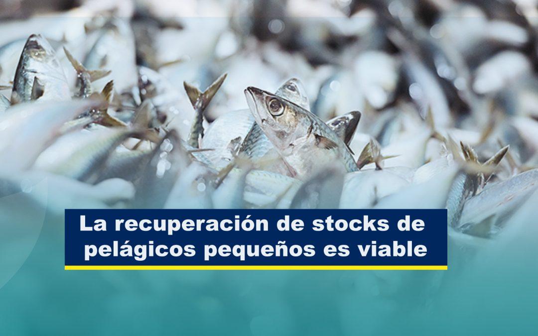 La recuperación de stocks de pelágicos pequeños es viable