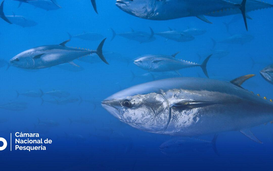 Países miembros de CIAT establecen nuevas medidas de ordenación para el atún