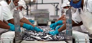 Importaciones de harina de pescado